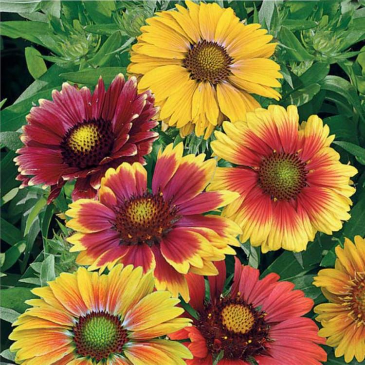 плотной ткани все семена цветов фото самом деле, это