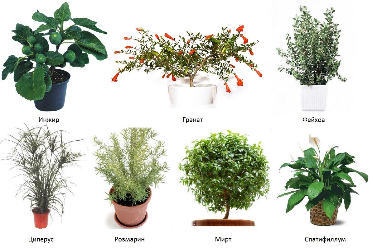 Цветы домашние и их названия картинки